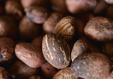 shea nuts - L'OCCITANE
