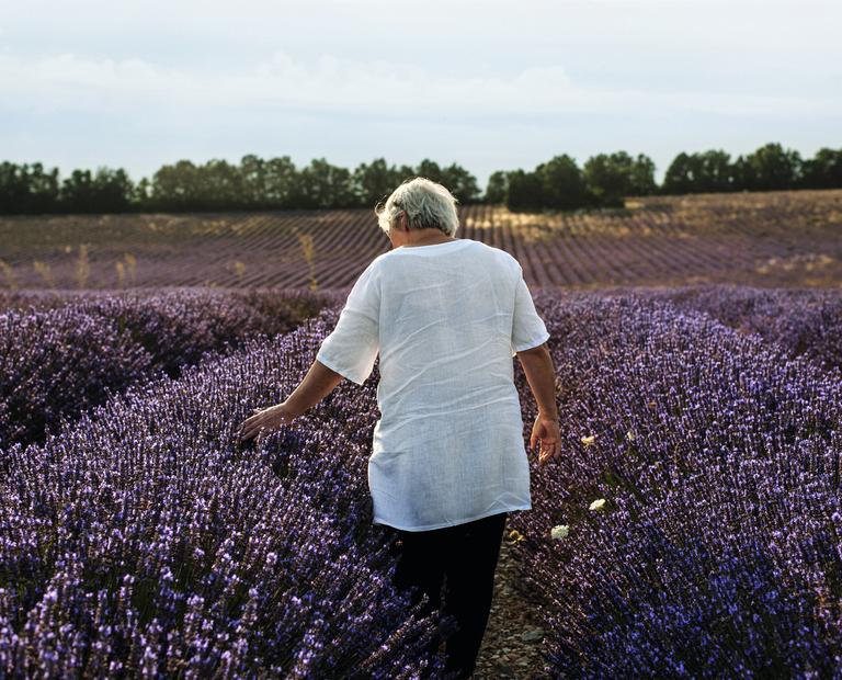 Lavender fields - L'Occitane