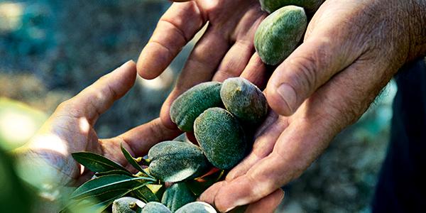 Almond nuts - L'Occitane