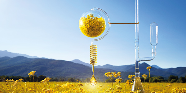 L'OCCITANE, A JOURNEY THAT STARTS IN PROVENCE