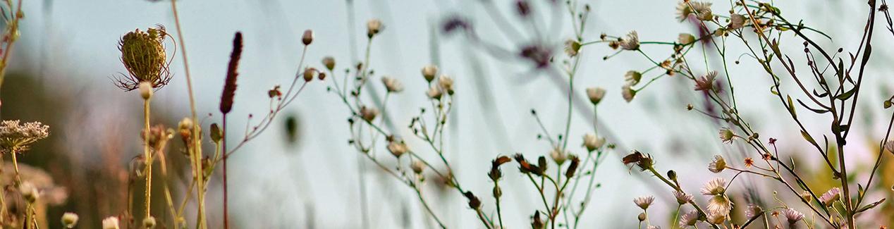 Herbae par L'OCCITANE