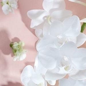 Néroli & Orchidée